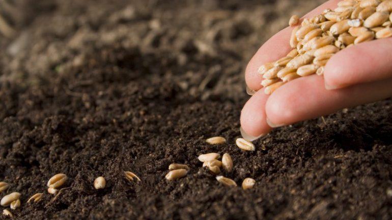 Yerel tohumlar
