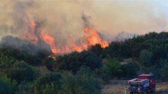 HKP İzmir İl Örgütü'nden orman yangınlarıyla ilgili açıklama: Küllerimizden Doğacağız!