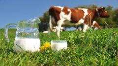 Dünya Süt Günü, tarımda dışa bağımlılığın gölgesinde kutlanıyor!