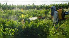 Ülkemizde tarım ilacı kullanımı ve yasaklandı denen tarım ilaçlarının durumu